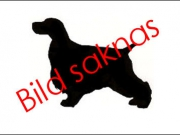 VALPKLASS 2 TIKAR, 1 HP Taxitaxi's California Hug S, 2 HP Backhills Zsa Zsa Gabor BLR, 3 HP Victim-of-Love ORR, 4 Turtle Dove's Feminine Style R