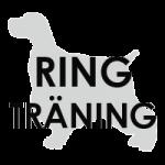 cockersydvast_ringträning